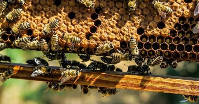 Повече търсене на мед и пчелни продукти